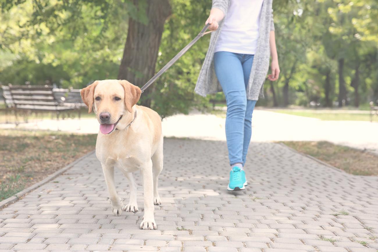 Weekly Dog Walking