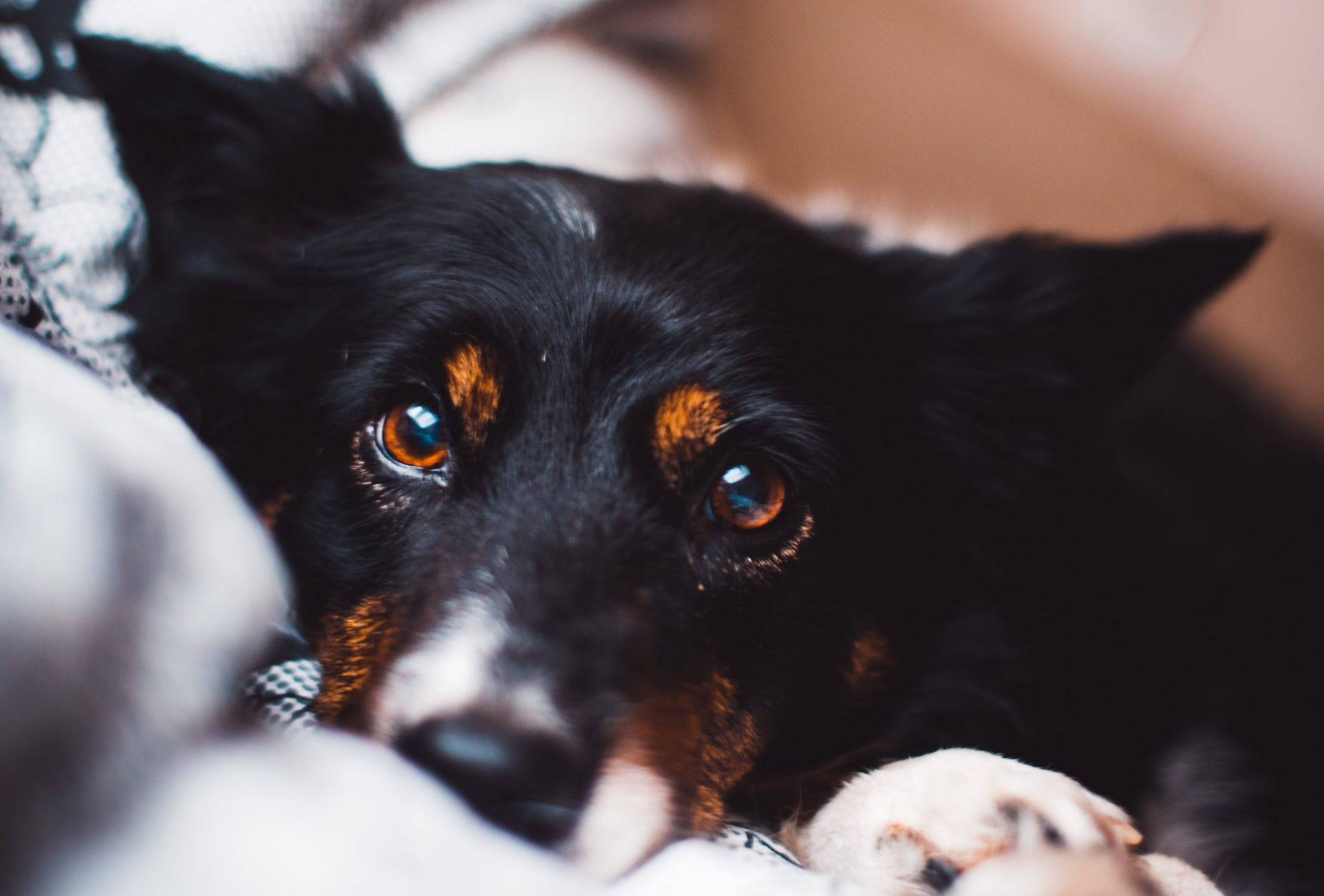 Your Best Friend Can Kill You(But Probably Won't): Intro to Zoonotic Diseases (More Fun Things to Share with your Dog!)